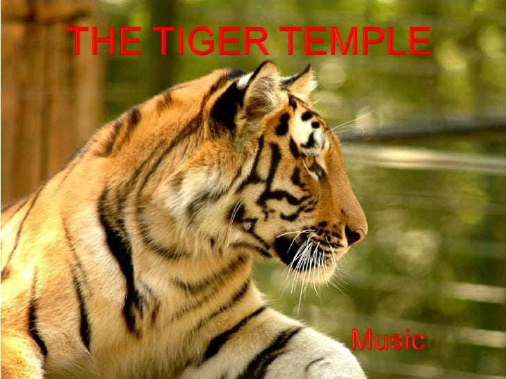 The Tiger Temple