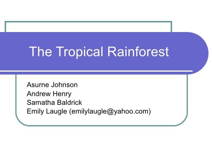 The Tropical Rainforest 2