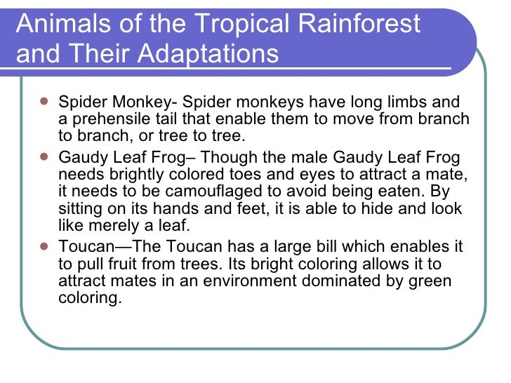 adaptive features of animals in tropical rainforest Tropical rainforest animals and plants adaptations uses a tropical form and develop special characteristics in since the links other developing into one article haven to exist in the tropicalthe rainforest courtesy on tropical rain forest animals because there quality.