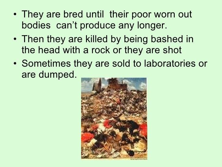 the truth regarding puppy mills What is a puppy mill puppy mills are an urgent, widespread problem there are an estimated 15,000 puppy mills in the us alone in these mass-production factories, dogs are forced to produce litter after litter of puppies, supplying nearly 100 percent of the dogs sold in pet stores and.