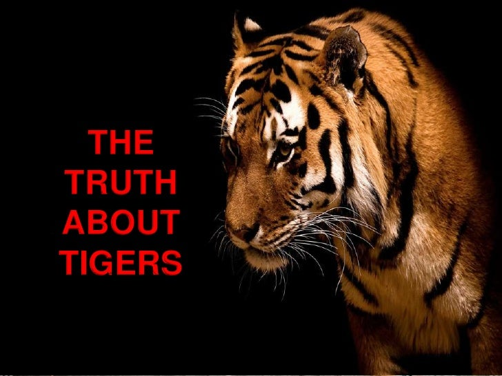 TRUTH ABOUT TIGERS<br />THE TRUTH ABOUT TIGERS<br />
