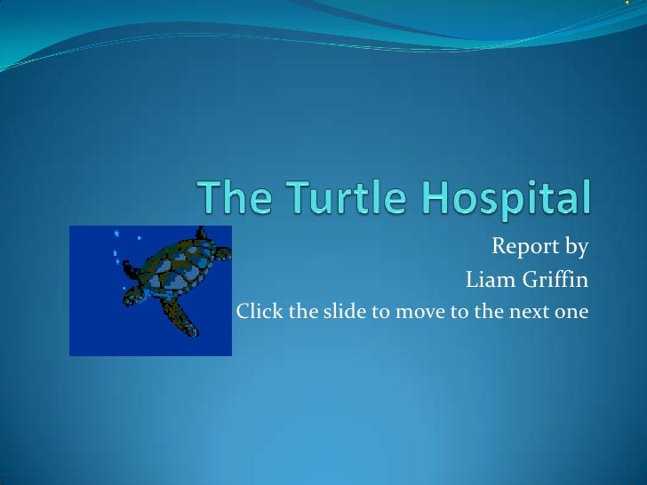 The Turtle Hospital<br />Report by<br />Liam Griffin<br />Click the slide to move to the next one<br />