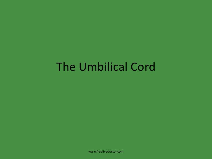 The umbilical cord