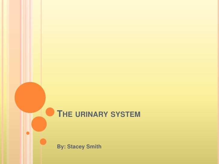 The urinary system <br />By: Stacey Smith<br />