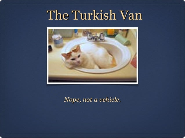 The Turkish Van  Nope, not a vehicle.