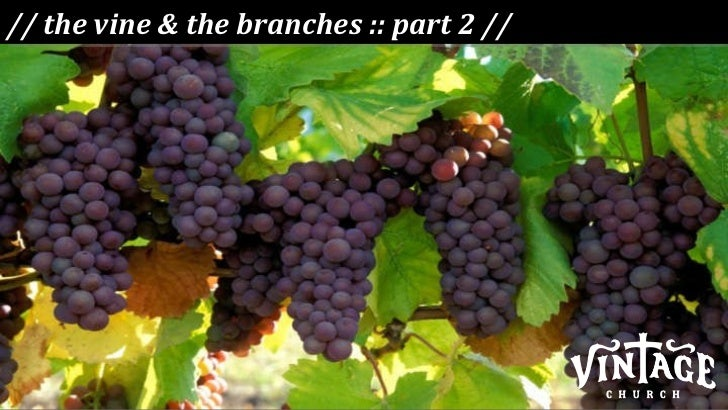// the vine & the branches :: part 2 //