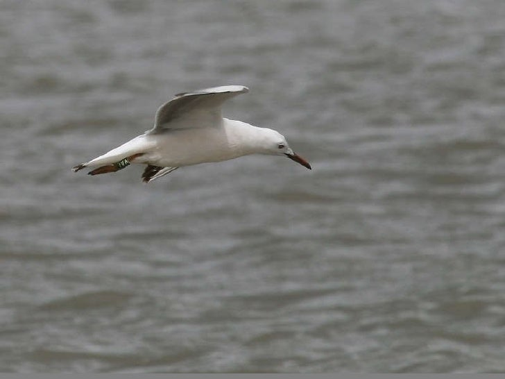 The waterflow birds-(catherine)