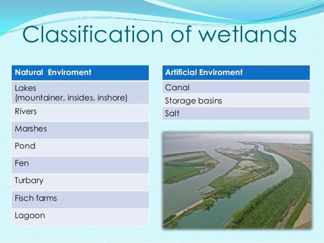 Classification of wetlandsNatural Enviroment               Artificial EnviromentLakes                            Canal(mou...