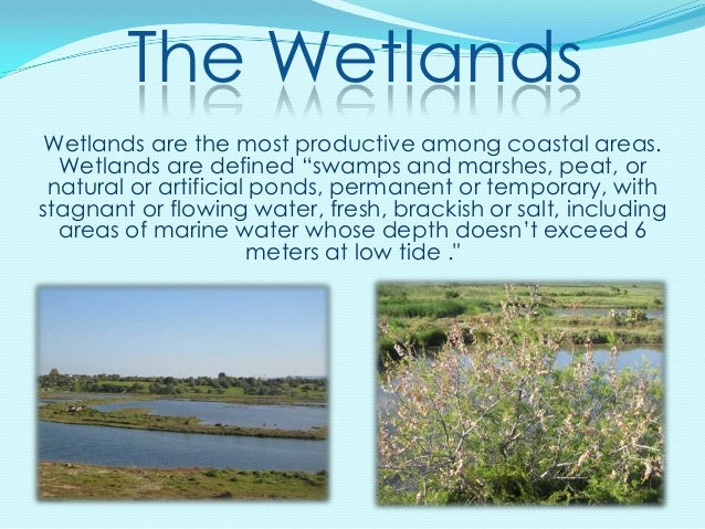 """The Wetlands Wetlands are the most productive among coastal areas.  Wetlands are defined """"swamps and marshes, peat, or nat..."""