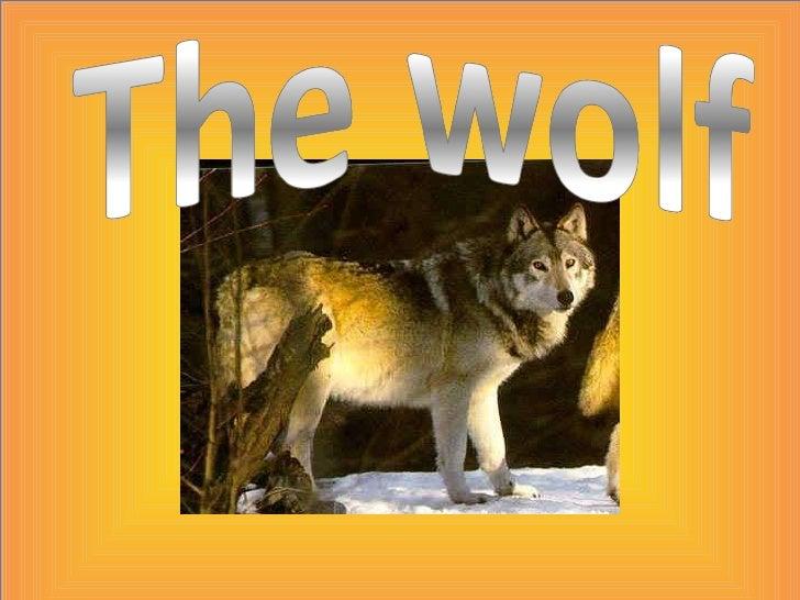The wolf arnau moreno 5e a