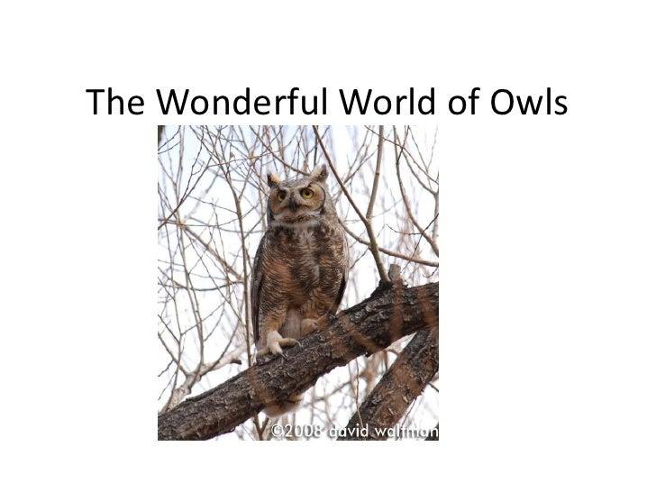 The Wonderful World of Owls