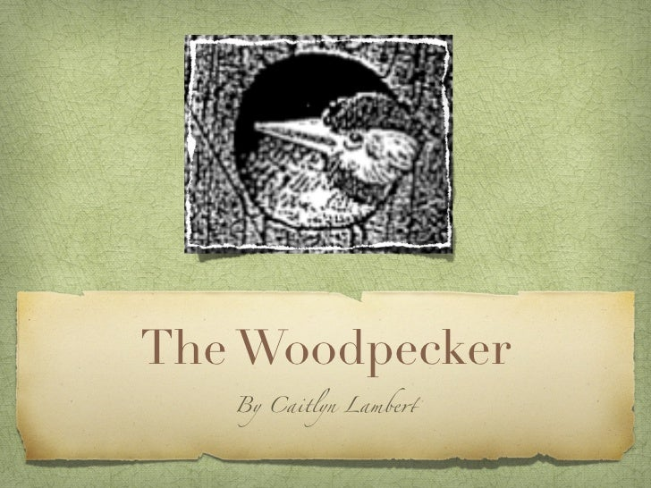 The Woodpecker   By Caitlyn Lambe!