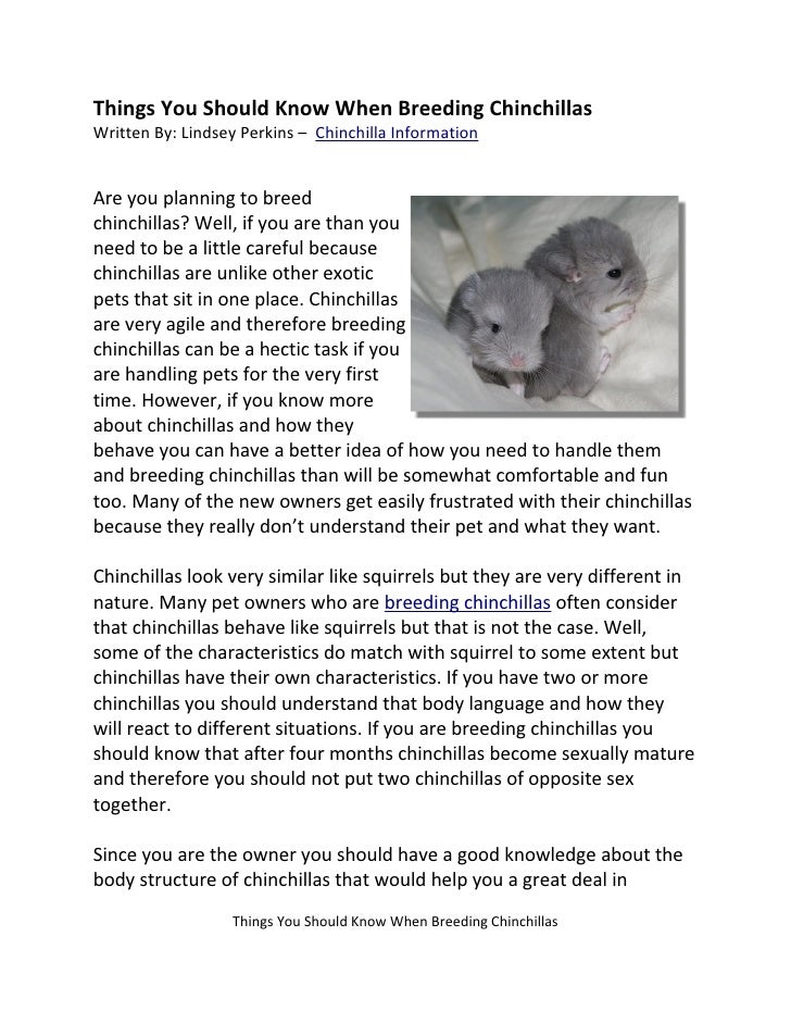 Things You Should Know When Breeding Chinchillas Written By: Lindsey Perkins – Chinchilla Information   Are you planning t...