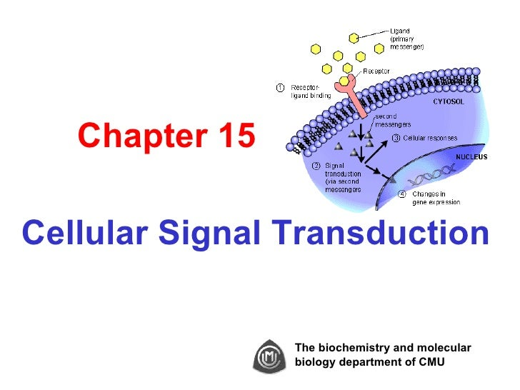 Chapter 15Cellular Signal Transduction                The biochemistry and molecular                biology department of ...