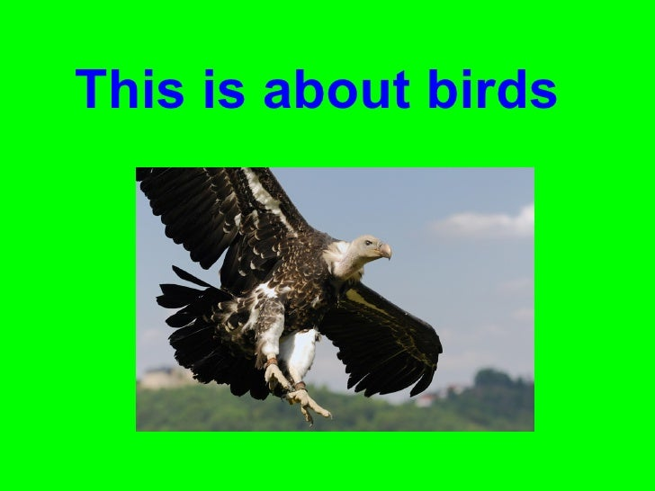 This is about birds