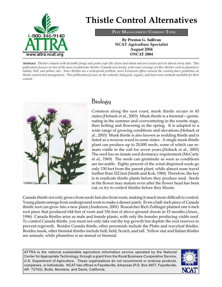 Thistle Control Alternatives
