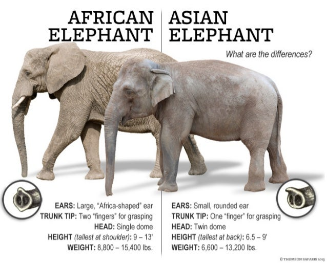 Thomson Safaris - The Difference between African and Asian Elephants