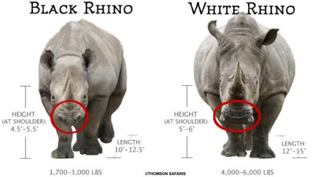What's the Difference Between Black and White Rhinos?