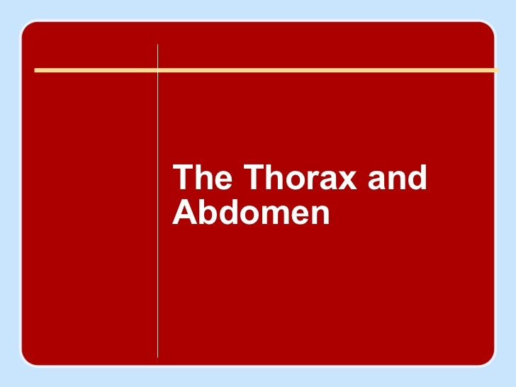 chapter  20 <ul><li>Thorax and Abdomen </li></ul>Author name here for Edited books The Thorax and Abdomen