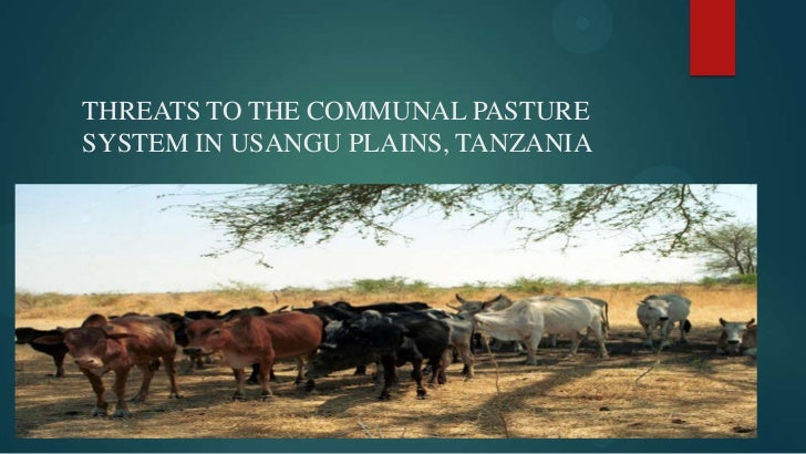 THREATS TO THE COMMUNAL PASTURESYSTEM IN USANGU PLAINS, TANZANIA