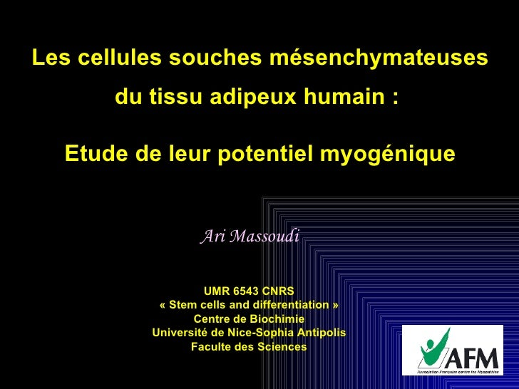 How fat stem cells could or not form muscle cells (French)