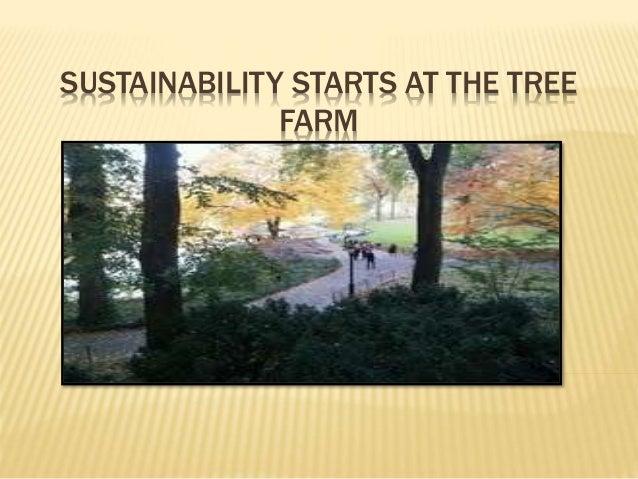 Sustainability Starts at the Tree Farm