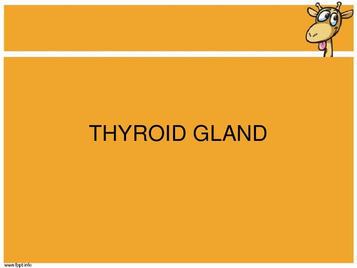 THYROID GLAND<br />
