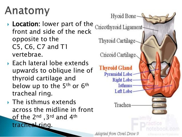 anatomy and physiology of pituitary gland pdf