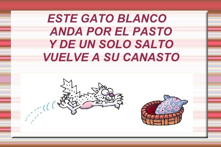 ESTE GATO BLANCO ANDA POR EL PASTO Y DE UN SOLO SALTOVUELVE A SU CANASTO