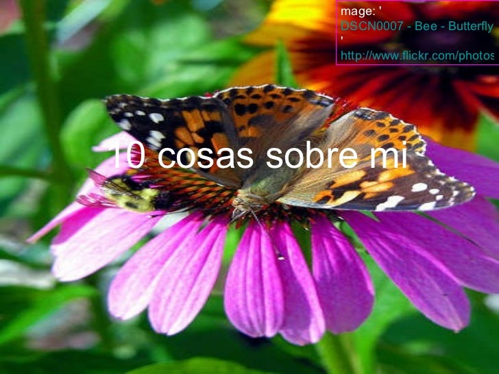 mage: ' DSCN0007 - Bee - Butterfly - Flower '  http://www.flickr.com/photos/22490717@N02/2227988261 10 cosas sobre mi