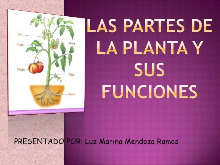 Las partes de la planta y sus funciones