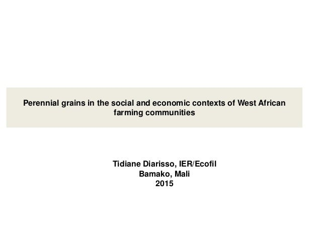 Perennial grains in the social and economic contexts of West African farming communities Tidiane Diarisso, IER/Ecofil Bama...