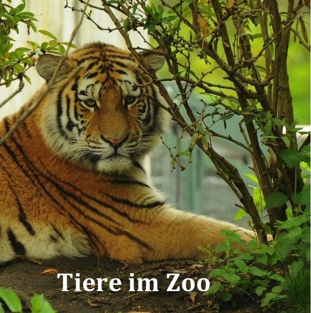 Tiere im Zoo (Bilderbuch)