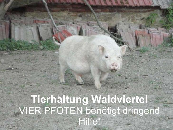Tierhaltung Waldviertel VIER PFOTEN benötigt dringend Hilfe!