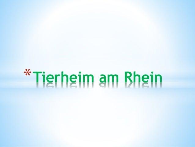 *Tierheim am Rhein