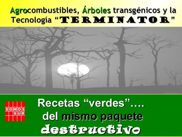 """AgroAgrocombustibles,combustibles, ÁrbolesÁrboles transgénicos y latransgénicos y la Tecnología """"Tecnología """"TerminatorTer..."""