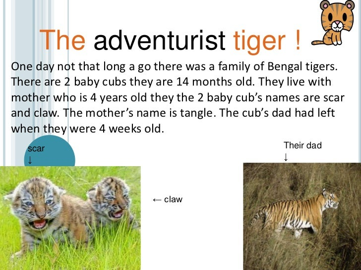 The adventurist tiger ! <br />One day not that long a go there was a family of Bengal tigers. There are 2 baby cubs they a...