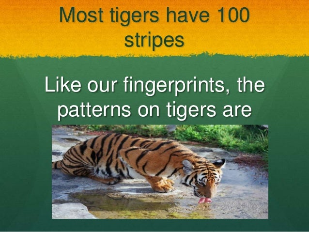 Fun tiger facts for kids - Health News by Date: MedlinePlus