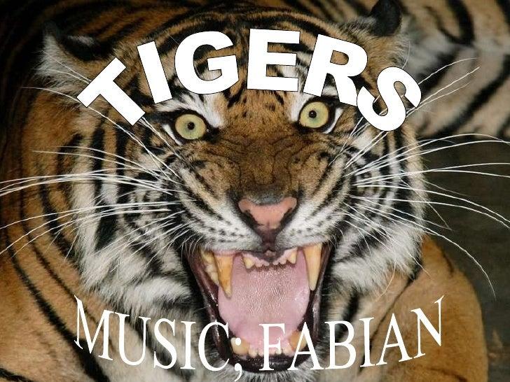 TIGERS MUSIC; FABIAN