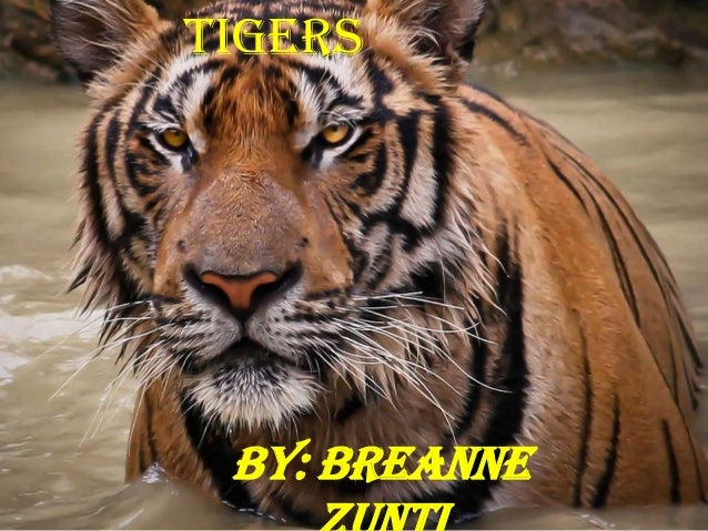Tigers By: Breanne