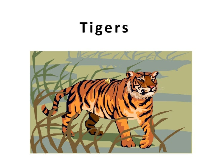 Tigers powerpoint