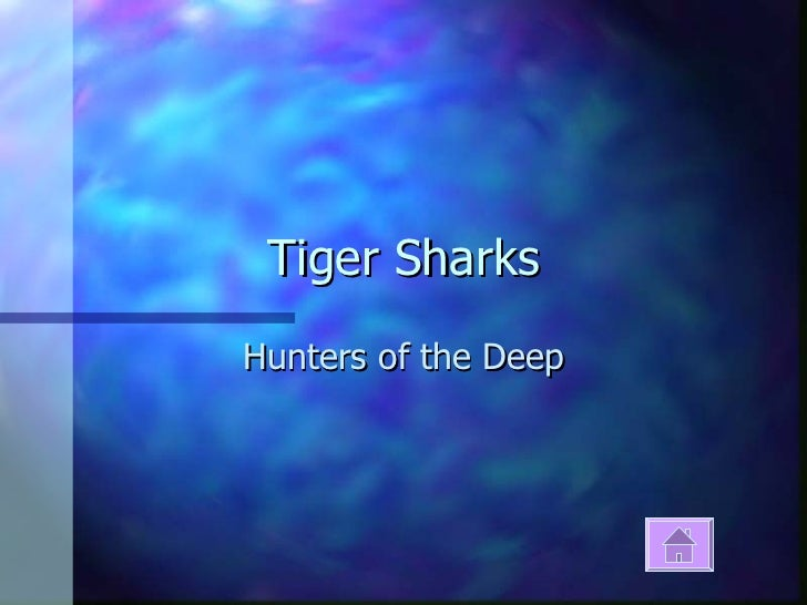 Tiger Sharks Hunters of the Deep