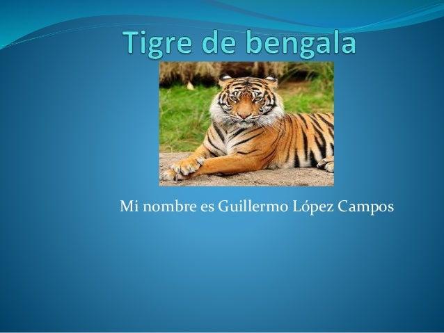Mi nombre es Guillermo López Campos