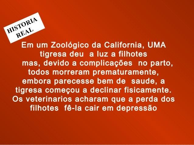 Em um Zoológico da California, UMA tigresa deu a luz a filhotes mas, devido a complicações no parto, todos morreram prem...