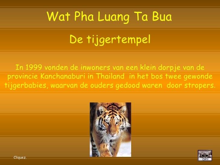 Wat Pha Luang Ta Bua   De tijgertempel In 1999 vonden de inwoners van een klein dorpje van de provincie Kanchanaburi in Th...