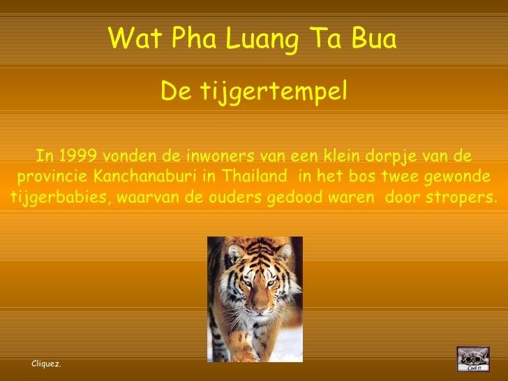 Wat Pha Luang Ta Bua                    De tijgertempel      In 1999 vonden de inwoners van een klein dorpje van de  provi...