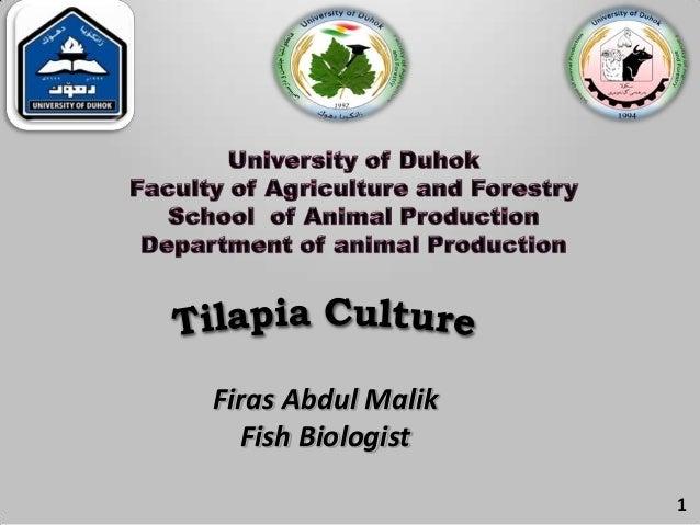 1Firas Abdul MalikFish Biologist