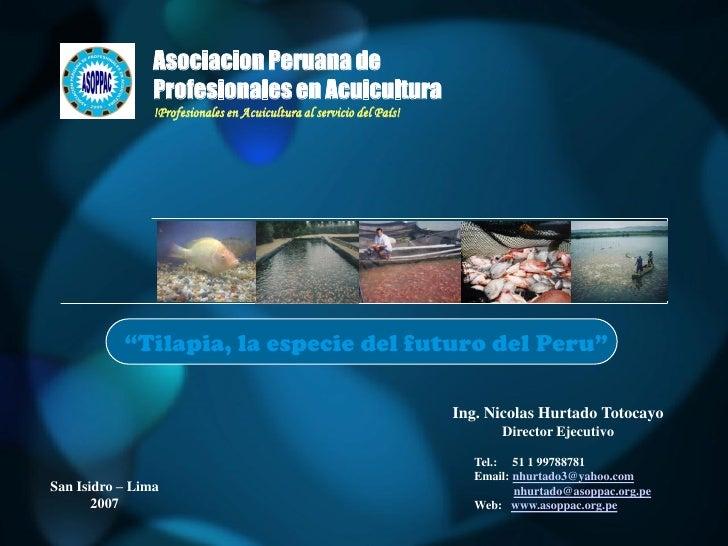 Tilapia la especie del futuro acuicola en el perú