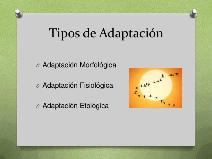 Tipos de AdaptaciónO Adaptación MorfológicaO Adaptación FisiológicaO Adaptación Etológica