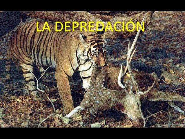 Depredacion Tipos de depredacion